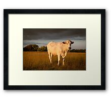 Rural Summer Evening Framed Print