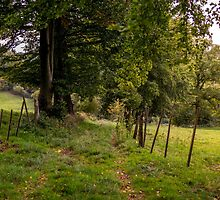 Meadow Grass Path by PatiDesigns