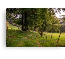 Meadow Grass Path Canvas Print