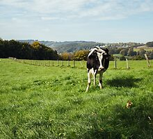 Dairy Cow by PatiDesigns