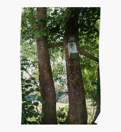 Bird House In A Tree Poster