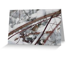 Song sparrow in the snowy brush Greeting Card