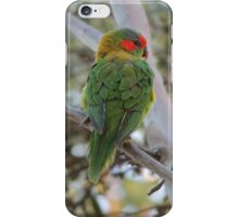 Musk Lorikeet (Glossopsitta concinna) - Thorndon Park, South Australia iPhone Case/Skin