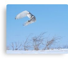 Into the wind Canvas Print