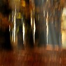 Vague autumnal memories by jchanders