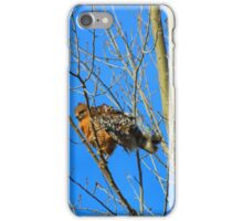 Red-Tailed Hawk Youngster iPhone Case/Skin