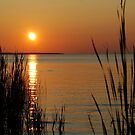 Sunset Through the Reeds by Diane Blastorah