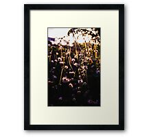 The flowers and the afternoon light Framed Print