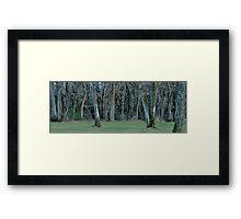 Old Kettle Woods Framed Print