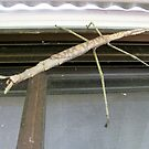 giant stick insect by Zefira