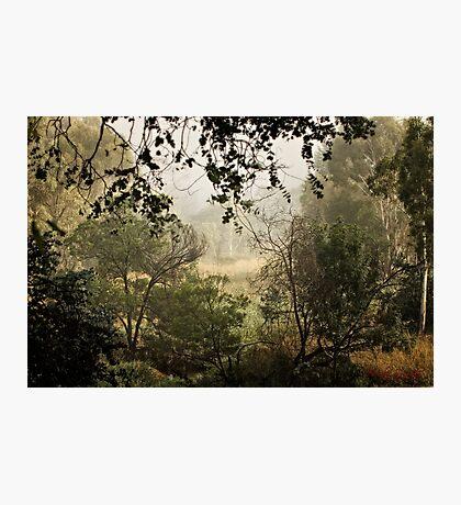 Umbagong district park (11) Photographic Print