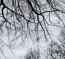 Winter tree canopy Sticker