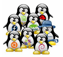 Linux Distro Photographic Print