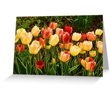 Impressions of Gardens - Particolored Vernal Tulips Greeting Card