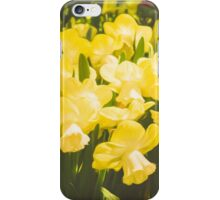 Impressions of Gardens - Golden Daffodil Blooms iPhone Case/Skin