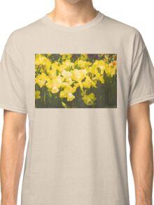 Impressions of Gardens - Golden Daffodil Blooms Classic T-Shirt