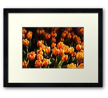 Impressions of Gardens - Flame Colored Tulip Abundance Framed Print
