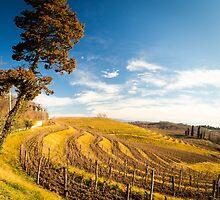 Vineyard in late winter by zakaz86