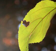 Heart in the Leaf by JuliaRokicka