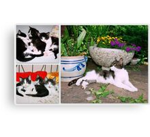 Hollywood with kittens Canvas Print