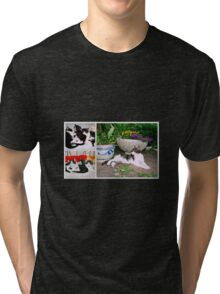 Hollywood with kittens Tri-blend T-Shirt