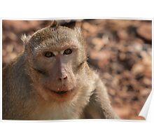 The Happy Monkey Poster