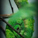 Lizard Tail by Tracey Hampton