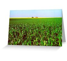 Oil Seed View Greeting Card