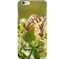 Southern Swallowtail Butterfly iPhone Case/Skin