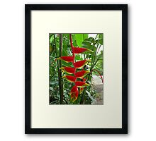 Heliconia 2 Framed Print
