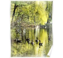 Geese by Willow Poster