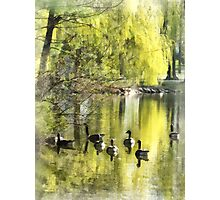 Geese by Willow Photographic Print
