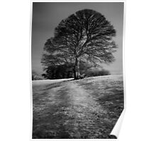 Tree Shaped by the Wind Poster