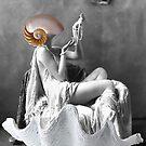 Mi shell by Susan Ringler