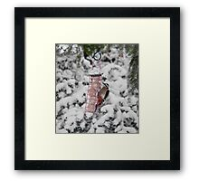 Great Spotted Woodpecker in snow Framed Print