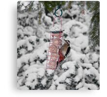 Great Spotted Woodpecker in snow Canvas Print