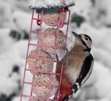 Great Spotted Woodpecker in snow Sticker