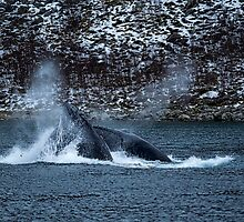 Humpback Whales by mlphoto