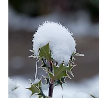 Holly Snow Cone Photographic Print