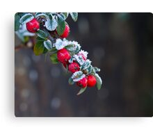 Red Berries With Frost Canvas Print