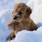 Angus-  I Love Snow- Little Sapling Gang by goldnzrule