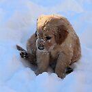 Dixie- Snow Is FUN! - Little Sapling Gang by goldnzrule