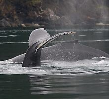 Humpback Whales in Motion by William C. Gladish