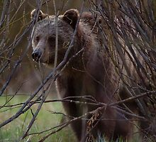 Visited by the Spirit Bear by Ken McElroy
