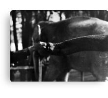Of Elephant and Men Canvas Print