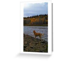 Blaze in Fall Splendour Greeting Card