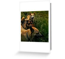 Blaze, Lily and Rose Makes Three Greeting Card