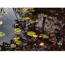 Fall Pond Reflections - a Story of Waterlilies and Japanese Maple Trees - Take One Photographic Print