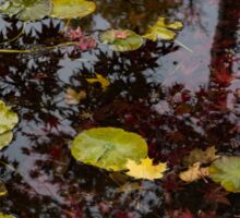 Fall Pond Reflections - a Story of Waterlilies and Japanese Maple Trees - Take One Sticker
