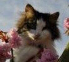 cute cat in a tree Sticker